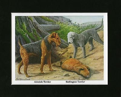 AIREDALE & BEDLINGTON TERRIER DOGS Louis Agassiz Fuertes Mounted Ready to Frame