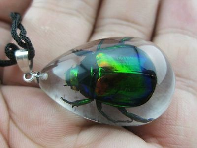 Green Beetle Insect Goth Pendant Strange Scary Gift Oddity