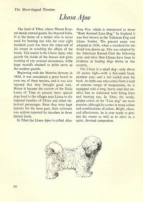 "The Lhasa Apso - Vintage Dog Art Print - Matted ""G"""