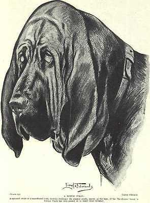 * Bloodhound Head - Vintage Dog Photo Print - 1934