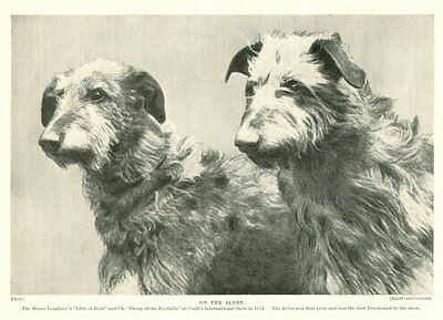 * Scottish Deerhound - Vintage Dog Photo Print - 1934