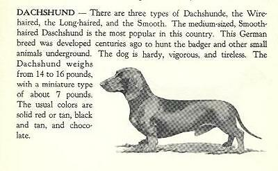 * Dachshund Vintage Dog Print - 1940 Cannon - Matted