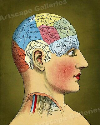 """1914 """"Phrenology Model"""" Vintage Style Unusual Medical Chart Poster - 24x30"""