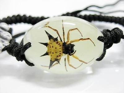 Accessories Real Insect Stinging Angle Spider Oval Bracelet Glow in dark NG