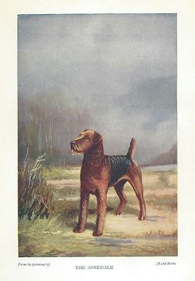 Airedale Terrier - 1931 Color Dog Print
