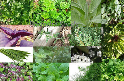 CULINARY HERB PACK 24 x packets of seeds SPRING edible herb vegetable garden
