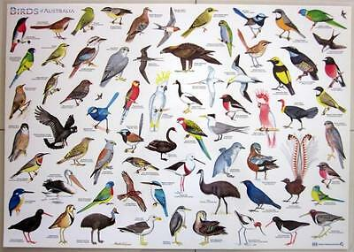 Birds Of Australia Laminated Chart Poster