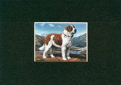 - Saint Bernard - Dog Art Print - Megargee CLEARANCE