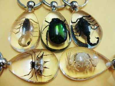 5pc wholesale MIX corpion& spider&scorpion&bee Clear drop XMAS key-chains dd