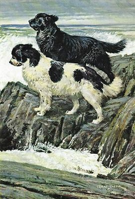 Newfoundland - Vintage Color Dog Print - MATTED