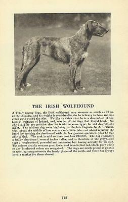 Irish Wolfhound - 1931 Vintage Dog Print - MATTED