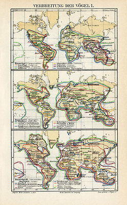 Antique Map-DISPERSION OF BIRDS-WORLD MAP-Meyers-1895