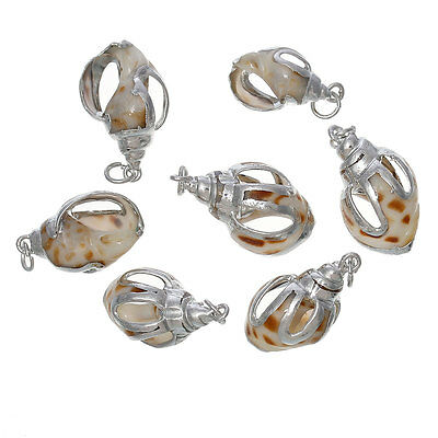 Shell Charm Pendants Conch Natural 5 PCs DIY Jewellery Crafts High Quality