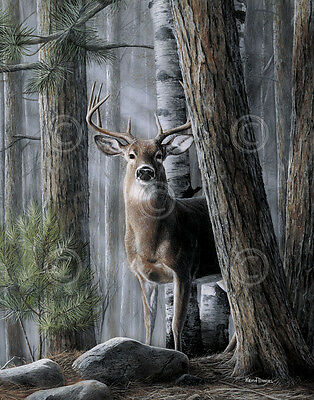 Solitary Buck by Kevin Daniel Art Print Wildlife Deer Hunting Poster 11x14