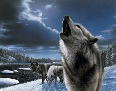 WILDLIFE ART PRINT - Howling Wolf by Kevin Daniel Wolves Poster 19x13