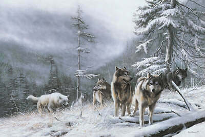 WILDLIFE ART PRINT Search for Survival by Kevin Daniel Wolf Wolves Poster 19x13