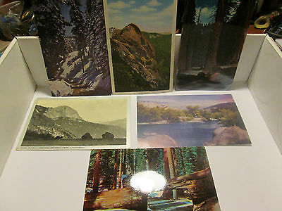 VINTAGE LOT OF 6 POSTCARDS SEQUOIA PARK CALIFORNIA NICE SHIPED FREE! PHOTO'S