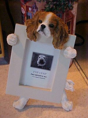 Cavalier King Charles Spaniel ~ Picture Frame #18