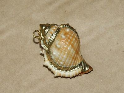 Vintage Genuine Conch Sea Shell Pendant Gold Plate Accents 1 1/2 inches