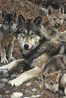 WOLF ART PRINT Den Mother (detail) by Carl Brenders Wildlife Wolves Poster 38x50