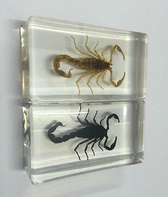 PAIR Fashion Real Gothic Scorpion in Clear Lucite Resin Paperweights Specimen