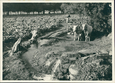 India, Coutryside scene  Vintage silver print.  Tirage argentique  8x10,5