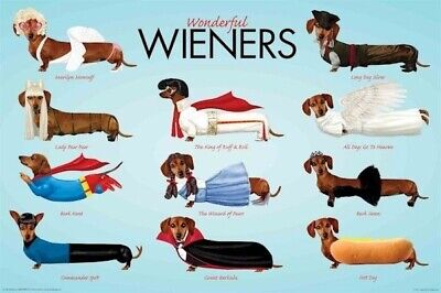 ANIMAL POSTER ~ DOGS WIENERS WONDERFUL COSTUMES 24x36 Dog Animals Dachshund