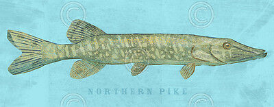 FISH ART PRINT - Northern Pike by John W. Golden Fishing Wildlife Poster 14x32