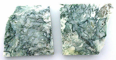 66.5 Gram Two Natural Tree Agate Slab Cab Cabochon Gemstone Gem Stone Rough TAS1
