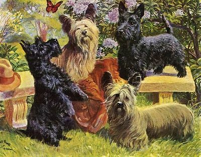 Scottish & Skye Terrier - Vintage Color Dog Print - MATTED