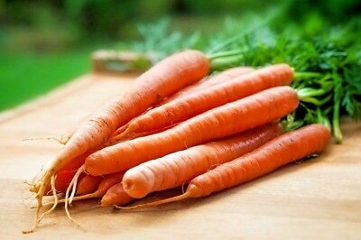 CARROT 'All Seasons' 200 vegetable garden Boondie Seeds cool climate HEIRLOOM