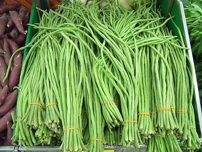 BEAN 'Snake' 20 seeds vegetable garden yardlong asparagus bean UNUSUAL HEIRLOOM