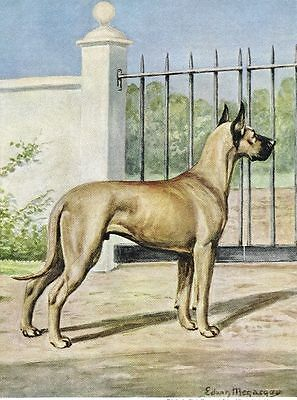 Fawn Great Dane - Vintage Color Dog Print - MATTED
