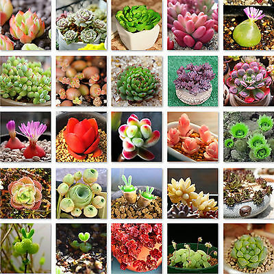 Fad 60pcs Succulents Seeds Rare Mini Potted Flower Seeds Home Office Decorative