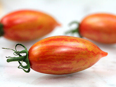 Vegetable Tomato Cherry Artisan Pink Tiger 10 Finest Seeds