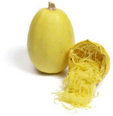 SPAGHETTI SQUASH 10+ seeds vegetable spaghetti UNUSUAL non gmo HEIRLOOM garden