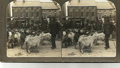 irish rare stereocard ireland westmeath goat market athlone for poorer classes