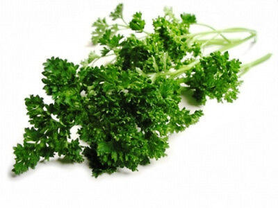 PARSLEY 'Curled' 200 seeds EASY TO GROW vegetable herb garden culinary edible