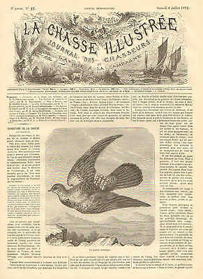 Birds, Messenger Pigeon, Homing Pigeon, Vintage 1872 French Antique Art Print,