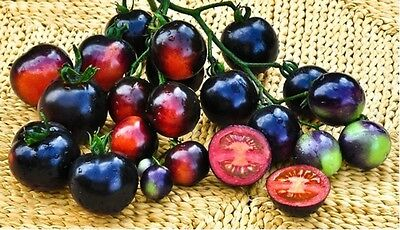 Vegetable Tomato Indigo Rose 10 Finest Seeds
