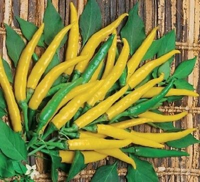 Vegetable  Hot Chilli Pepper Ljuti  100 Finest Seeds