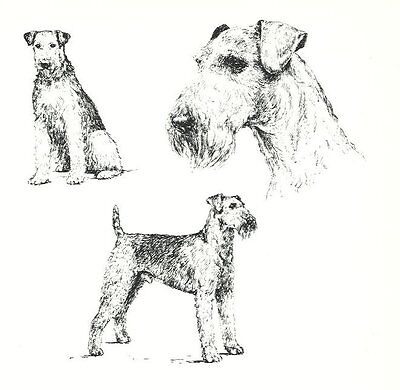 Airedale Terrier - 1963 Vintage Dog Print - Matted