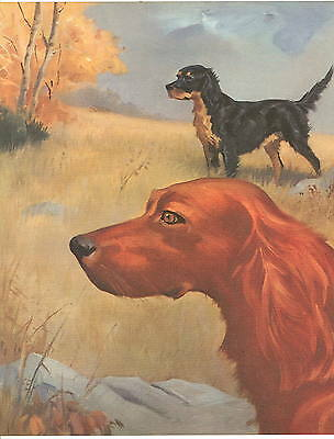 1955 DOG Print- IRISH SETTER & GORDON SETTER by Wesley Dennis-Book Illustration