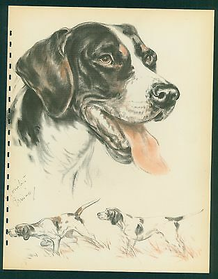 1944 DIANA THORNE DOG Print- POINTER -Vintage Book Illustration- 10 x 13 inch