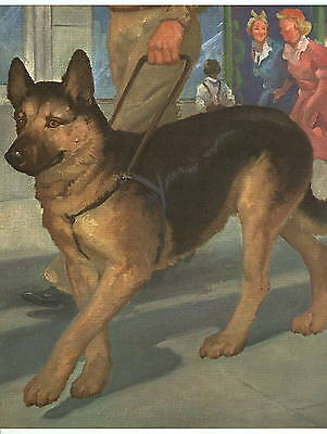 1955 DOG Print-GERMAN SHEPHERD GUIDE DOG-Wesley Dennis-Vintage Book Illustration