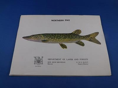 Northern Pike Information Booklet Department Lands And Forests Ontario Fish