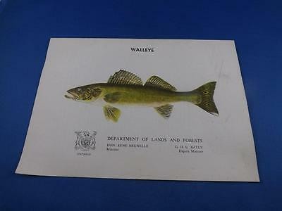 Walleye Information Booklet Department Lands And Forests Ontario Canada  Fish