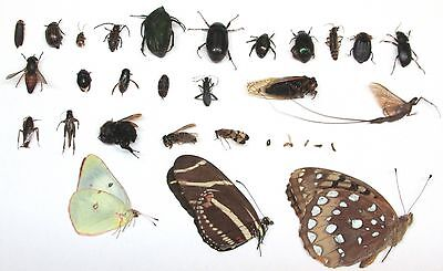 31 USA NATIVE Identified Insect Collection Dead Bug Collection Hexapod named