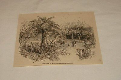 1886 magazine engraving ~ LAWN OF A PRIVATE RESIDENCE, Bermuda