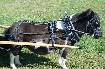 """Ultimate mini miniature horse biothane parade harness with 14"""" collar"""